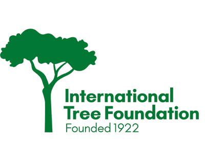 pioppo-tree-foundation